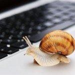 Ноутбук и улитка