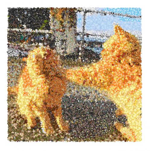 фото эмодзи котиков
