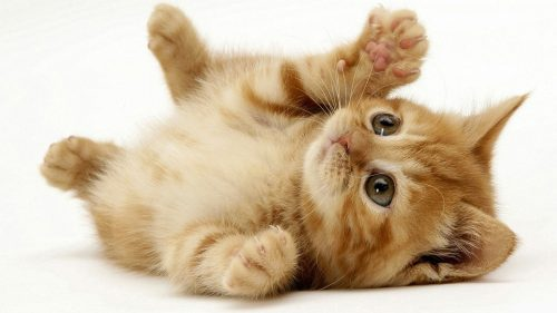 фото котика