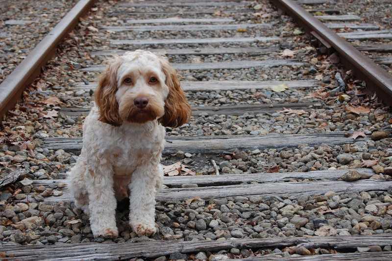 Щенок на железной дороге