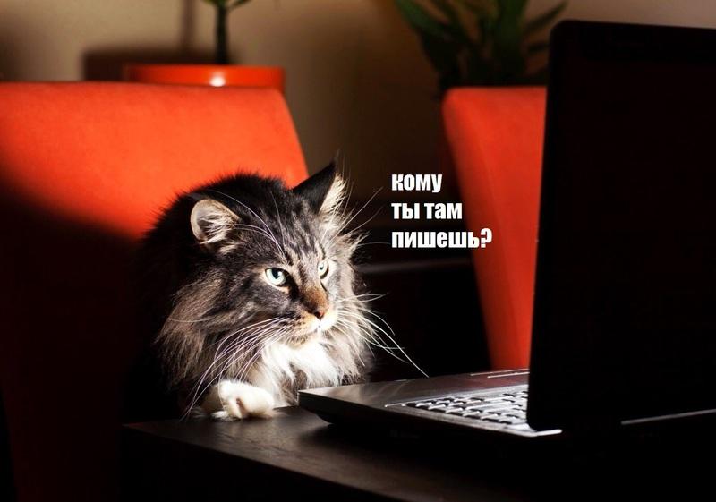 кот следит ватсап