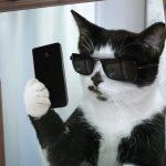 test-vybery-kartinku-telefona-chtoby-uznst-o-sebe